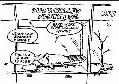 duck billed platitude