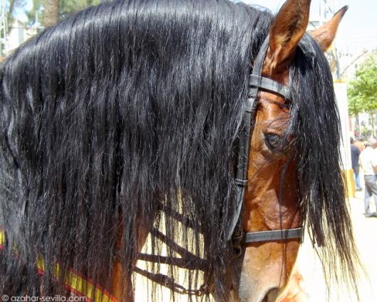 fff - horse