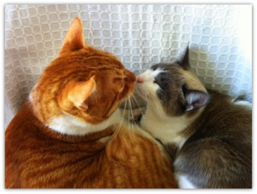 kissitos