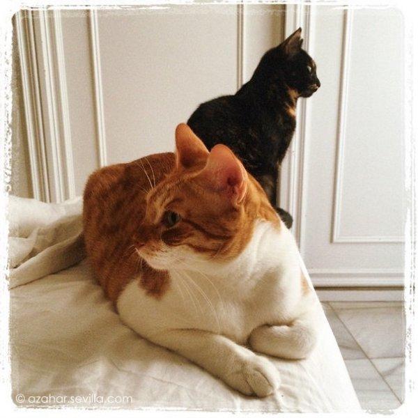 breakfast cats (1)