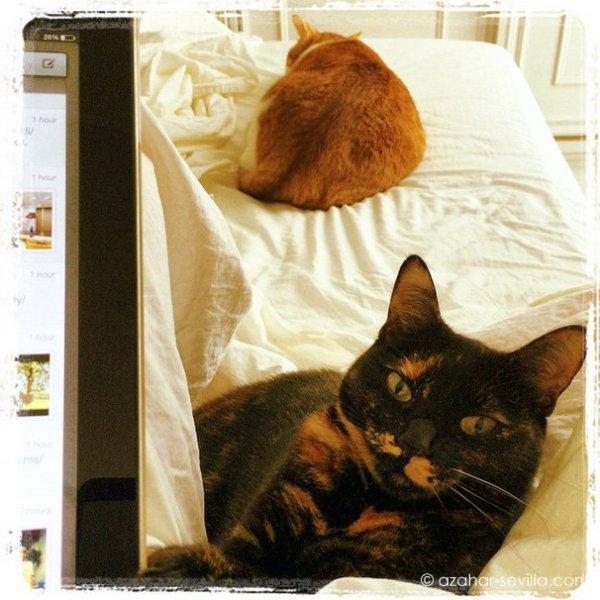 breakfast cats (2)
