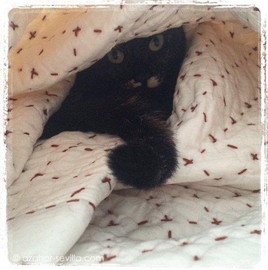 cosycat