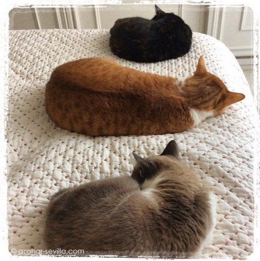 cats onna quilt