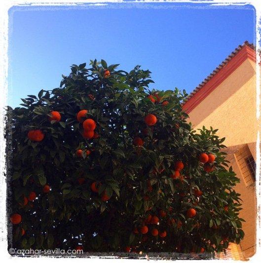 february oranges