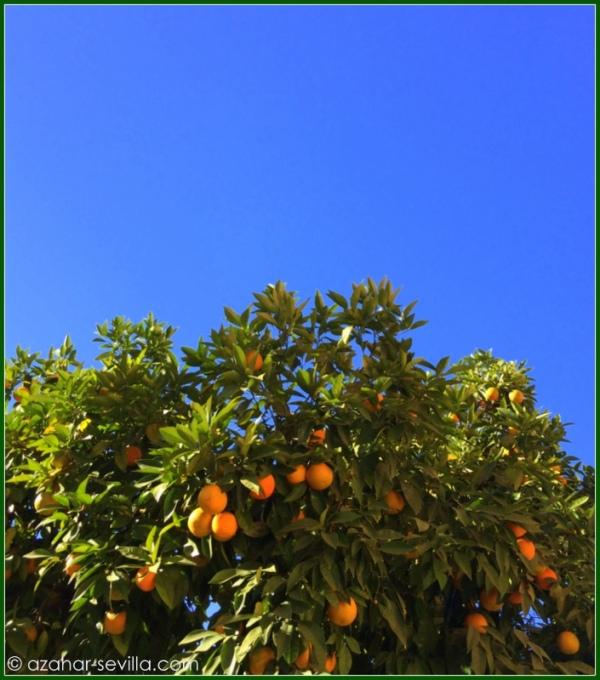 fff - fruit trees (2)