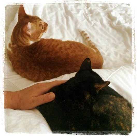 calm cats