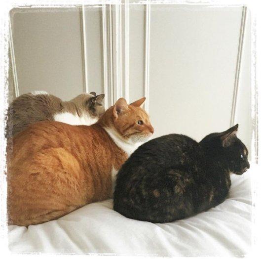 cosy-cats-1