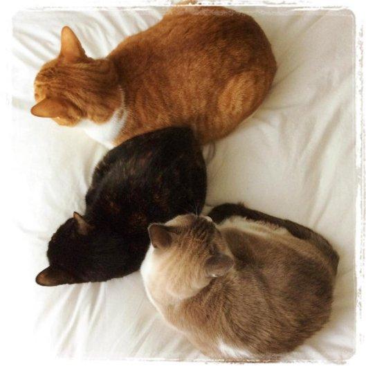 cosy-cats-2