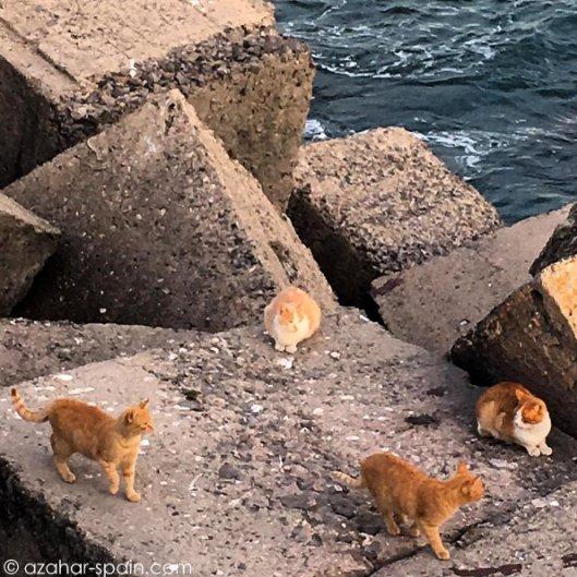 cadiz-cats-birds-2