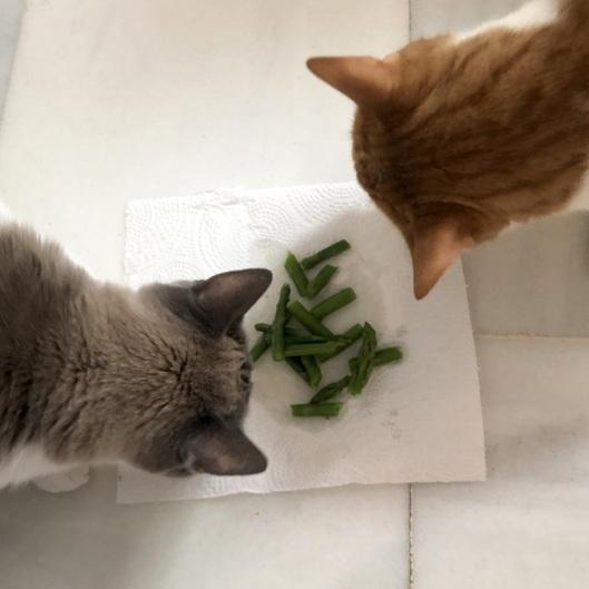 asparagus 2020