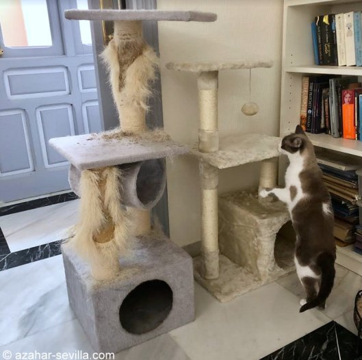 cat stand (3)