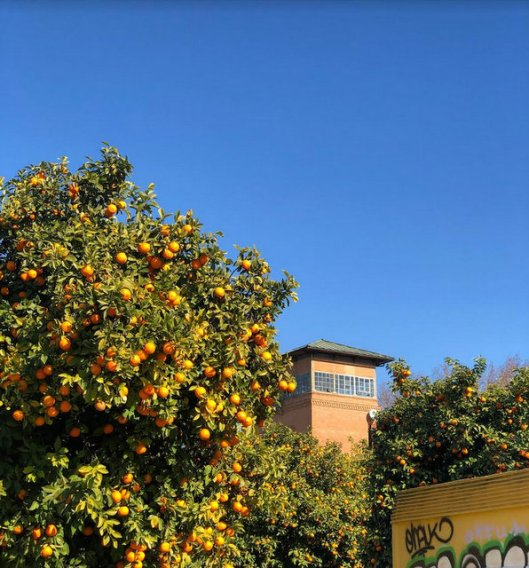 oranges (1)