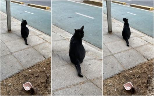 the cat (3)